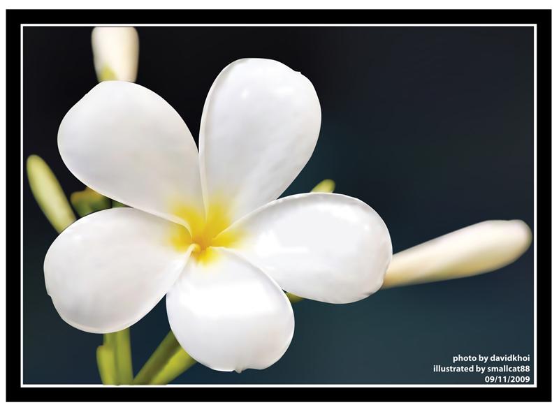 hoa su1